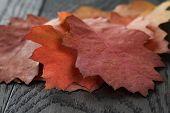 Autumn Red Oak Leaves On Old Oak Table
