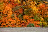 Bright autumn trees with beautiful color harmony