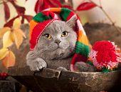 cat in gnome hat