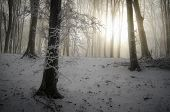 Sunrise in frozen forest with fog in winter