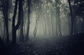 pic of mystery  - Path in dark mysterious forest with fog at night - JPG