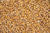 raw corn texture