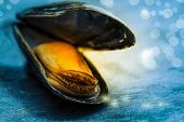 Open Mussel On A Slate Board With Bokeh And Sparkling Water Drops
