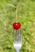 Fork With Berries