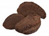 pic of brazil nut  - Brazil nut in front of white background - JPG