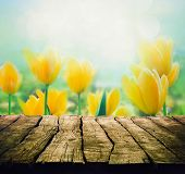 picture of seasonal  - Easter background with tabletop - JPG
