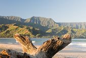 picture of driftwood  - Bay from Hanalei beach with an old log or driftwood framing view at Hanalei Kauai Hawaii - JPG