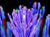 Purple Glowing Lavender Fractal