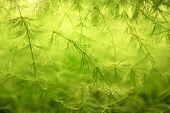 Green plant closeup photo