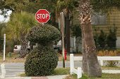 The Quirky Stop Sign