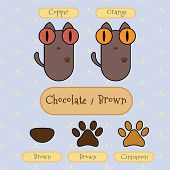 Chocolate/brown Color Cat.