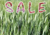 concept of sale
