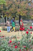 Chandigarh, India - January 4, 2015: Indian People Visit Zakir Hussain Rose Garden