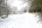 Pathway Through A Snowy Woodland