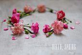 Carnation Hello Spring