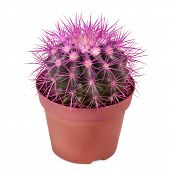 Cactus Planted In A Flower Pot