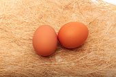 Golden Egg In A Makeshift Nest. On A White Background.