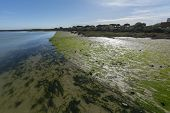 stock photo of green algae  - River bank near the mouth of the sea with algae