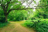 foto of path  - Walkway Lane Path With Green Trees in Forest - JPG