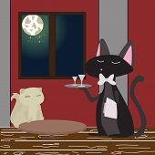 kitty order