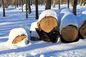 Wood Pile In Snow