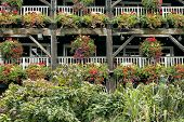 Flowering hanging baskets on old wooden rustic structure