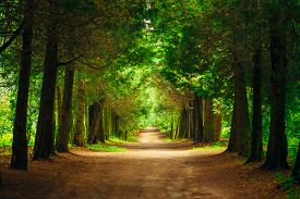 pic of landscapes beautiful  - Walkway Lane Path With Green Trees in Forest - JPG