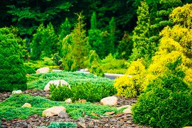 picture of cutting trees  - Flowerbed - JPG
