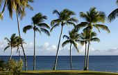 pic of west indies  - the coast of Le Diamant in Martinique - JPG