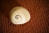 Lovely Spiral Shell