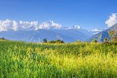 stock photo of sherpa  - green meadow on sunlight of annapurna circuit nepal - JPG
