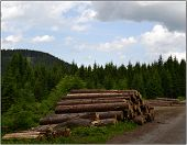 stock photo of cloud forest  - For forest roads in the mountains were several logs and trees wearing the sky were several clouds. ** Note: Shallow depth of field - JPG