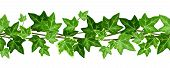 picture of ivy  - Vector horizontal seamless garland with green ivy leaves on a white background - JPG