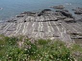 stock photo of strip  - Flowers and stripped cliff seascape photographed at Polzeath in Cornwall - JPG