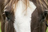 picture of horse face  - Horse face close up portrait frontal picture - JPG