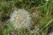 picture of floating  - floating seeds waiting to float away on the next big wind - JPG
