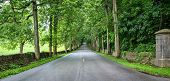 picture of thoroughbred  - Old Frankfort Pike in Kentucky is lined with historic stone fences and world famous horse farms - JPG