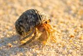 picture of creatures  - Beach Walker Exotic Creature  - JPG