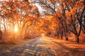 Autumn Forest. Forest With Country Road At Sunset poster