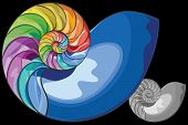 Colorful Nautilus Shell
