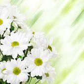 Floral Flower Border