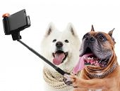 Funny dogs taking selfie on white background. poster