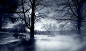 stock photo of winter trees  - silhoutted trees in winter with mist rising in forground - JPG