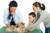 Doctor Vet Vaccine Puppy Dog