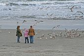 Feeding Sea Gulls