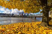Fall Foliage Under The Maple Tree With Portland Oregon City Skyline By Hawthorne Bridge Along Willam poster