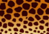 Structure For A Background - A Fluffy Skin Of A Leopard