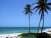 pic of tropical island  - three palm trees on a sandy - JPG