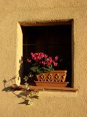 Small Window With Cyclamens