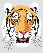 Head of a tiger, vector